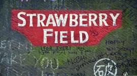 Straberry Field